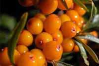 vibrand_fruite_01